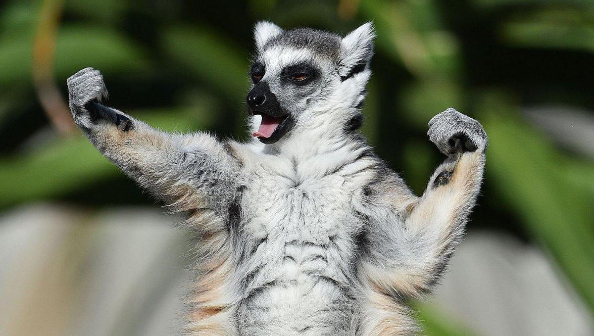 Своими руками, яндекс смешные картинки про животных