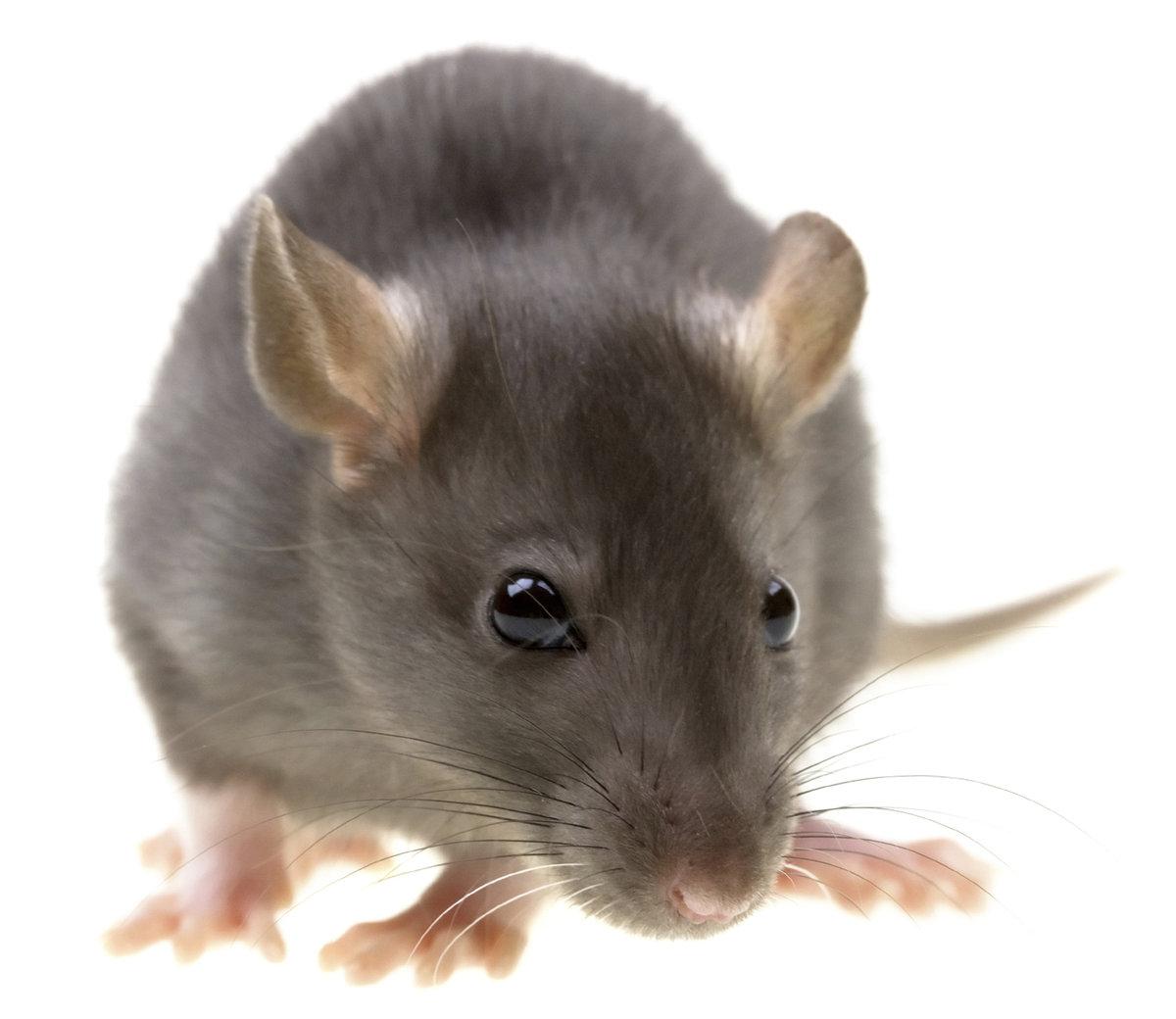 Картинки для мыши