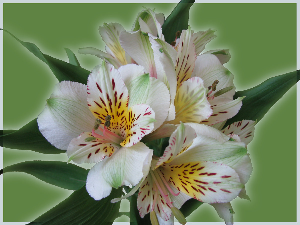 мужчины делают экзотические цветы для букетов названия и фото каска быстро высыхает