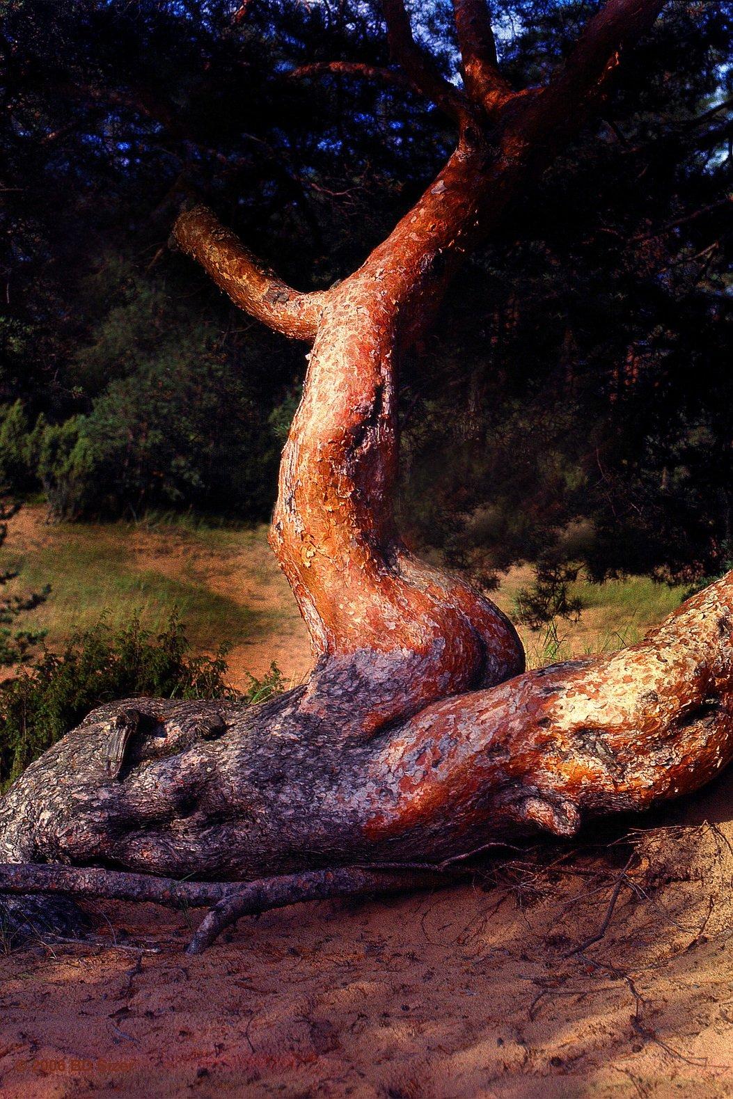 трахнул дерево фото - 2