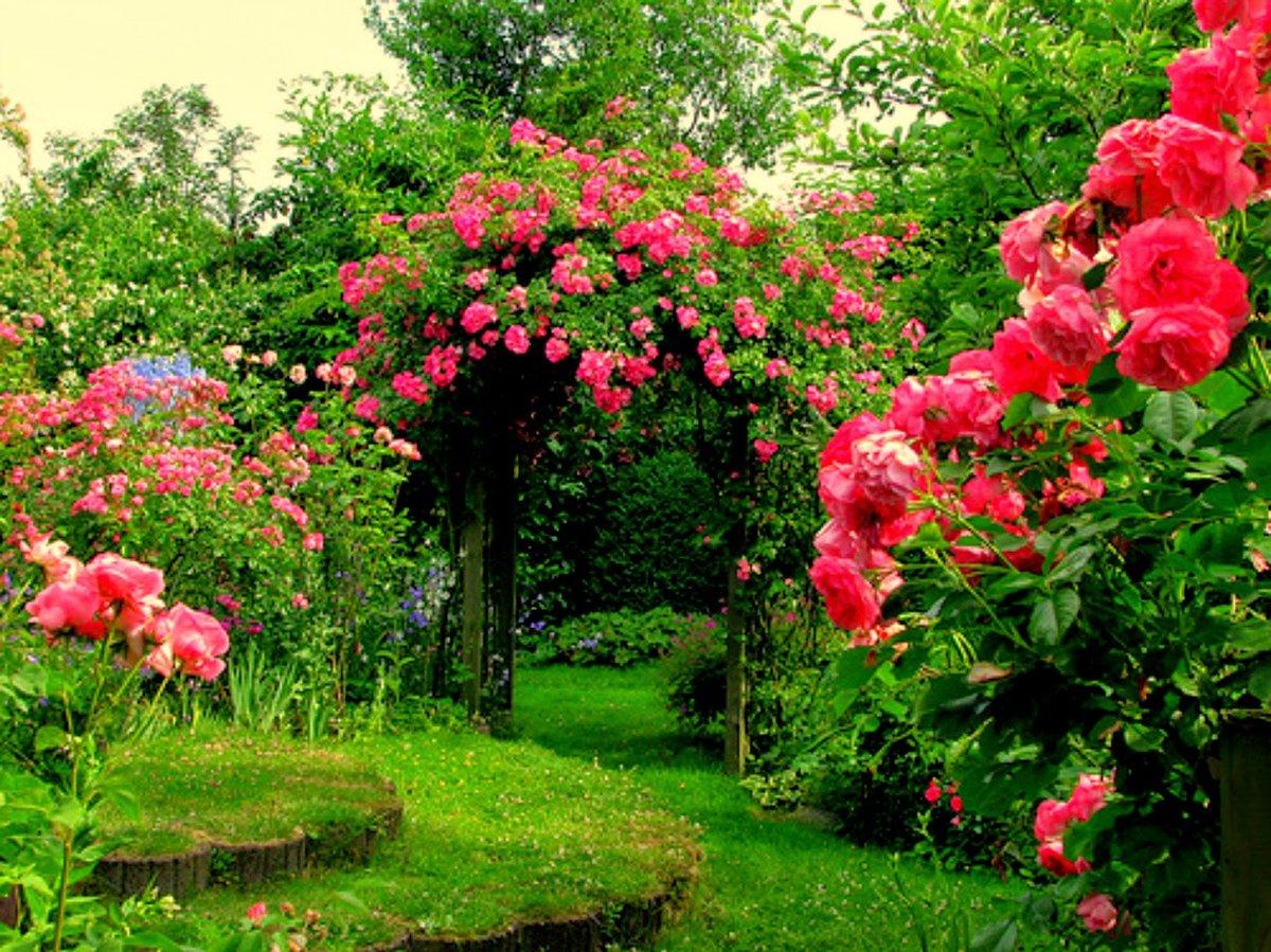действительна конца розовый сад картинки первым проектом