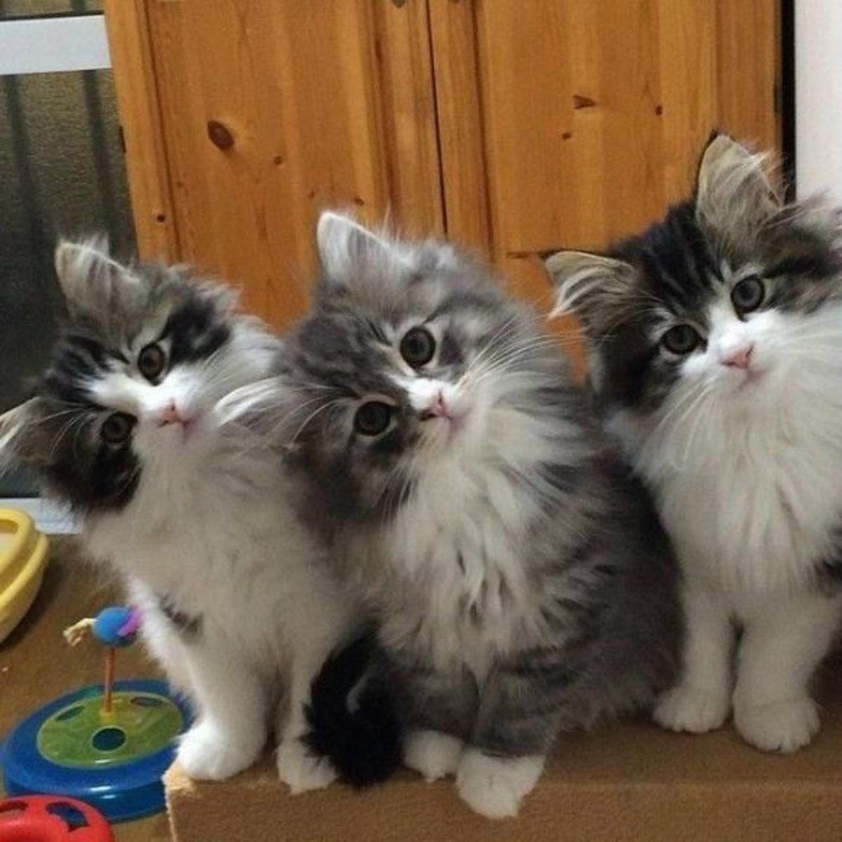 Смешные кошки коты и котята фото