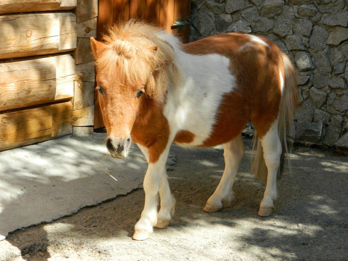 Картинка маленькие лошадки