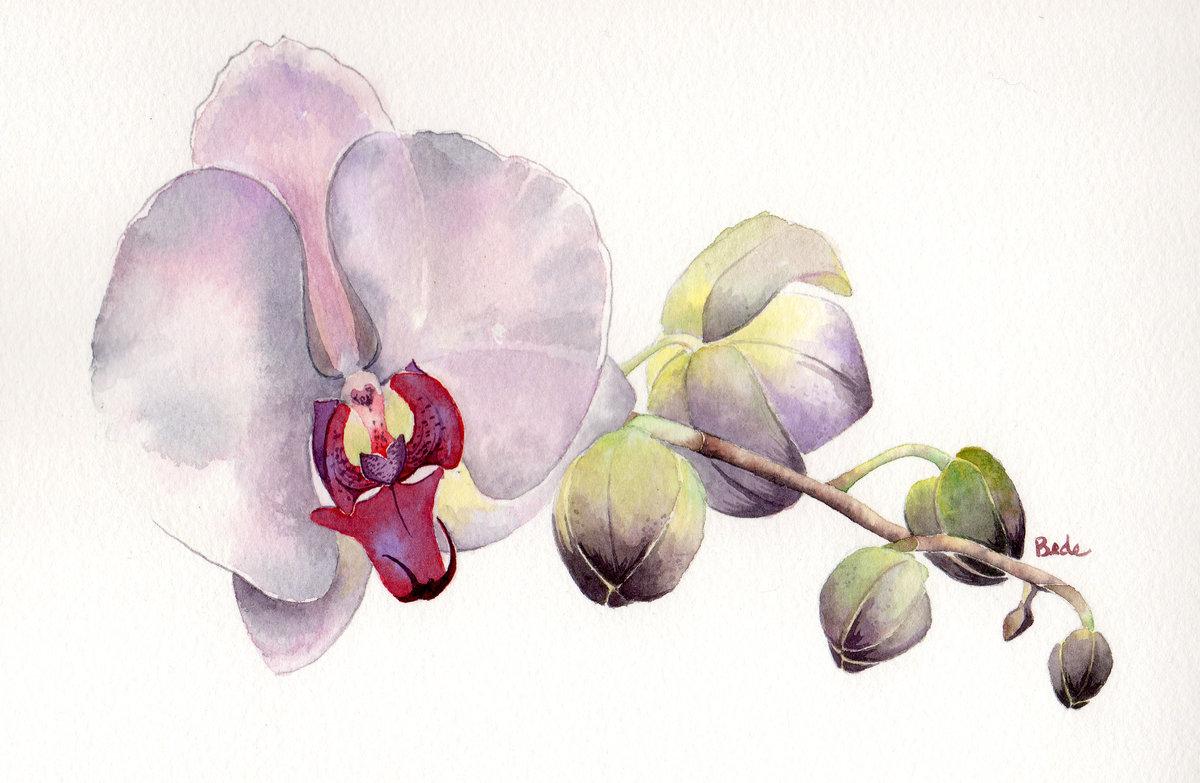 касалось картина для распечатки орхидея такую