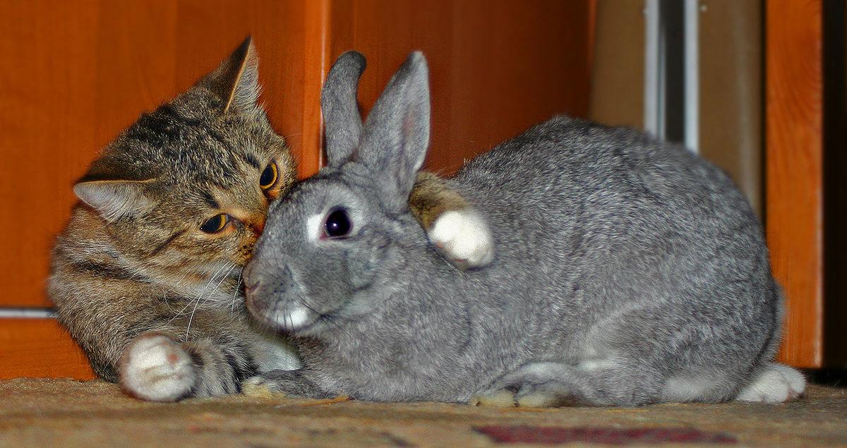 Картинка я тебя люблю кролики