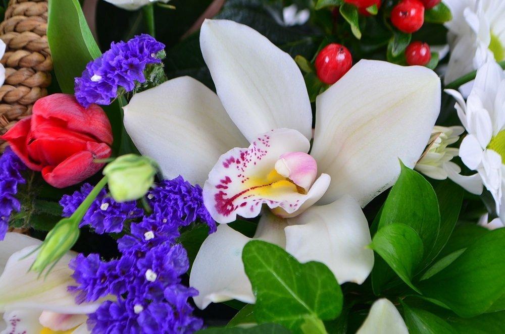 Красивые картинки красивые живые цветы