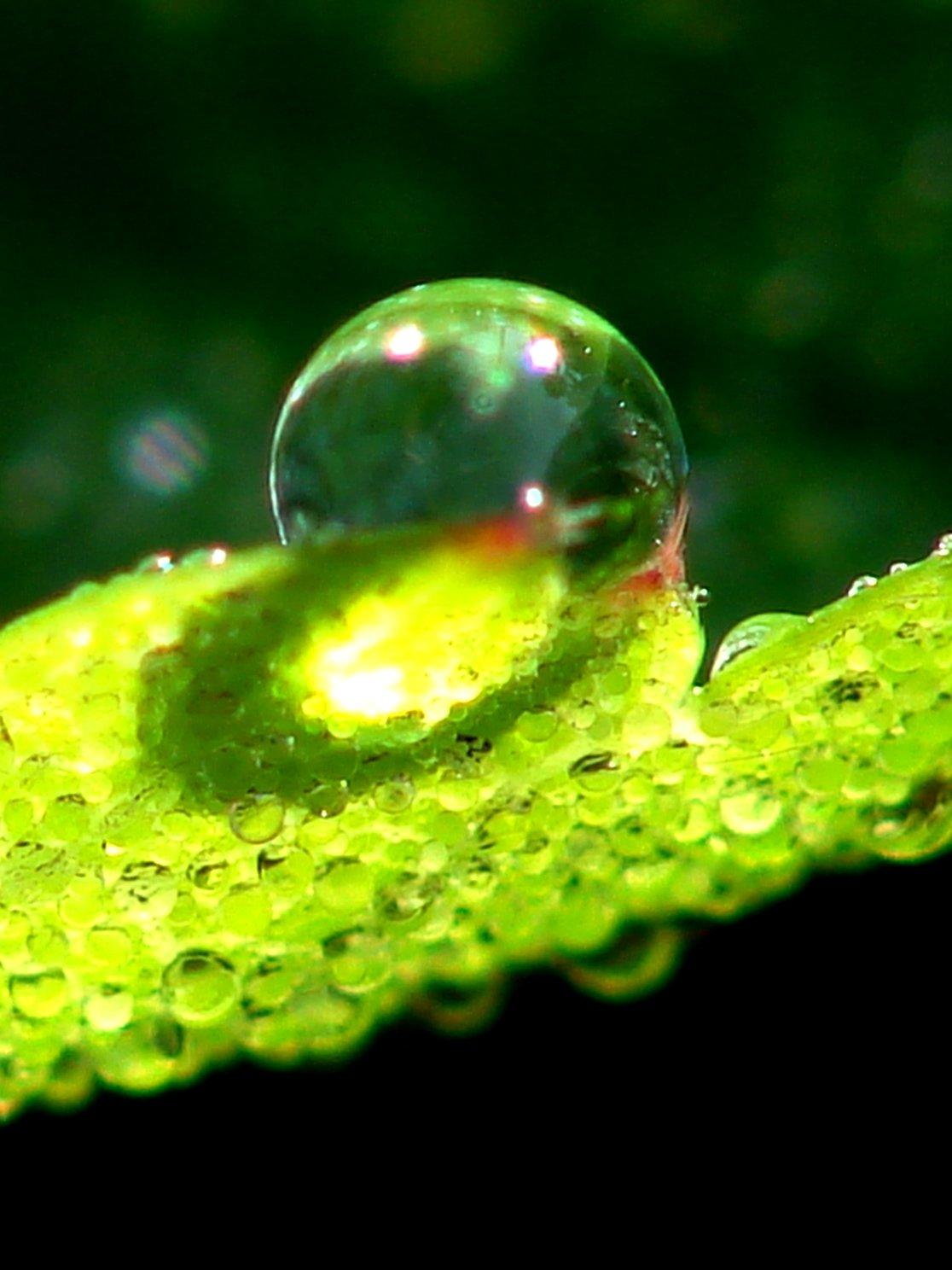 Капля воды в природе картинки для