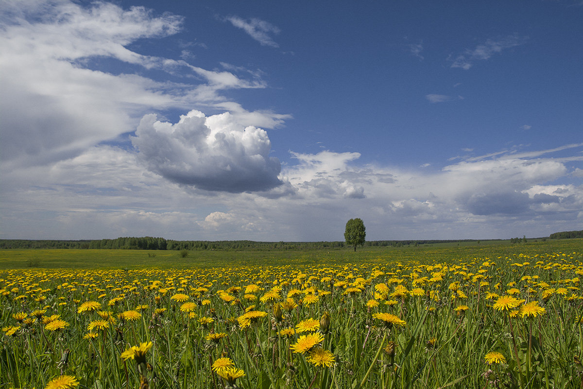 Поздравлением, картинки лето июнь