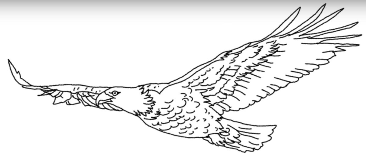 Рисунки орла в полете