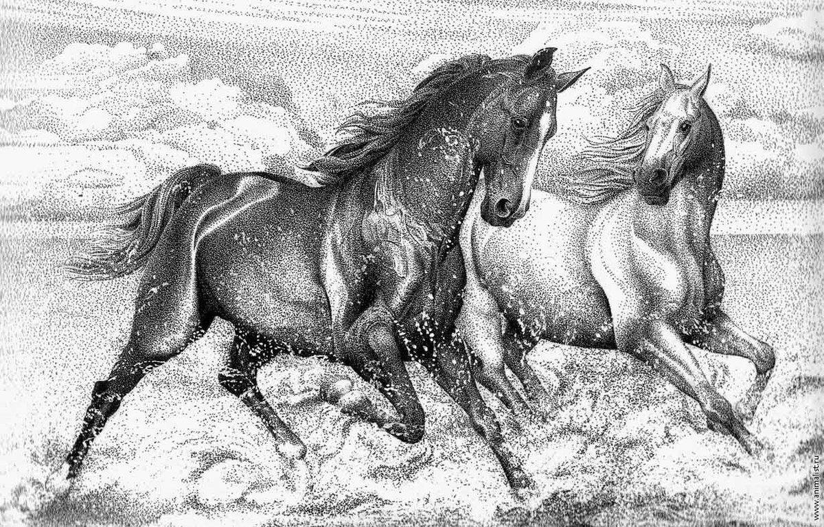 Фото коня графика
