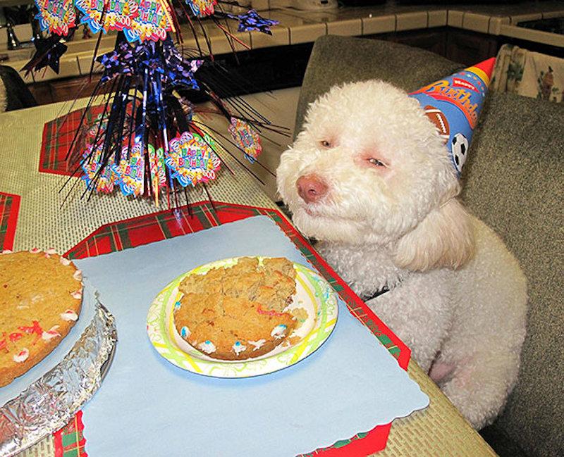 Смешные картинки с надписями до слез на день рождения