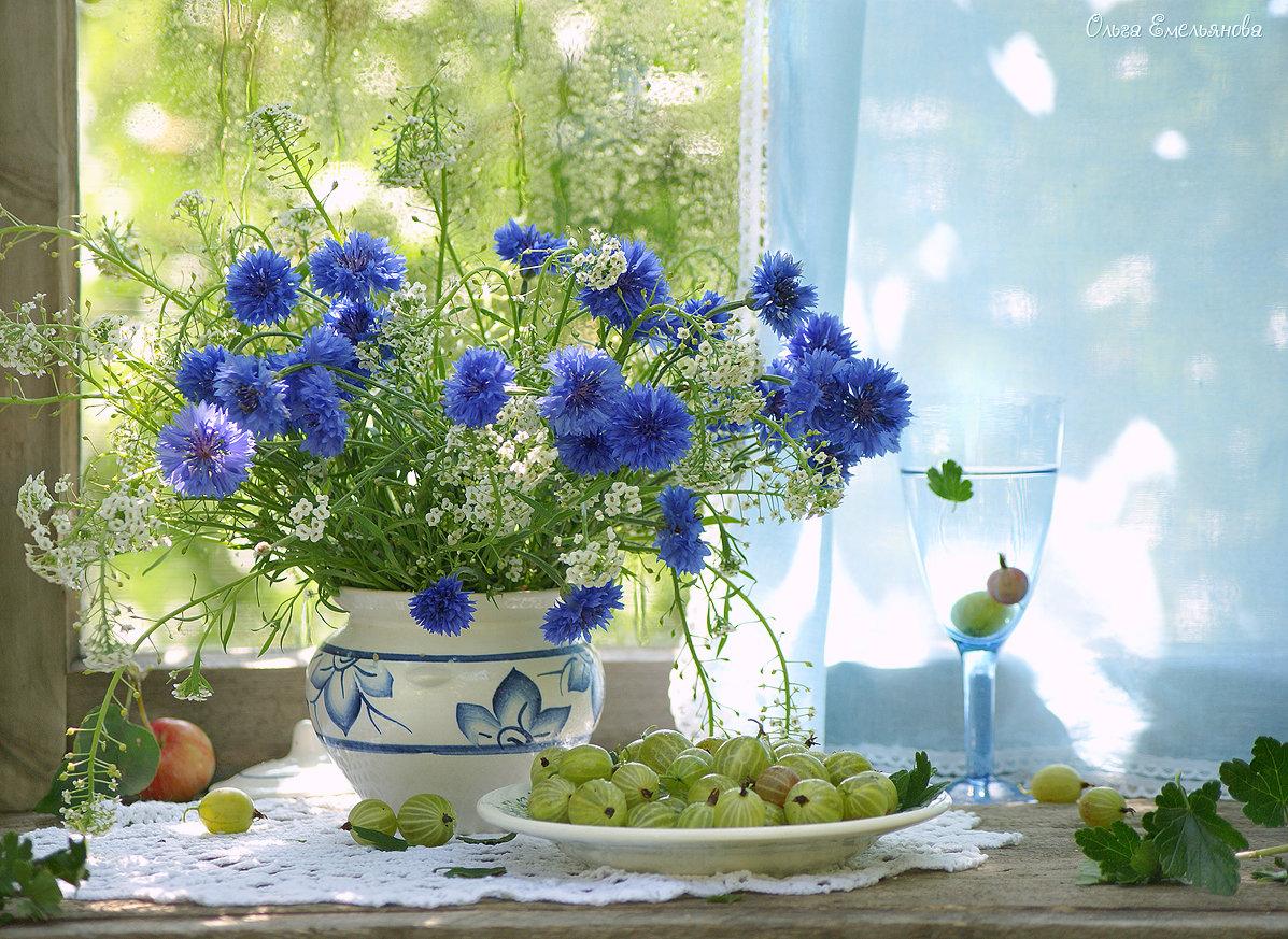 Васильки #август #васильки #крыжовник #лето #натюрморт #окно #сад #цветы #ягода