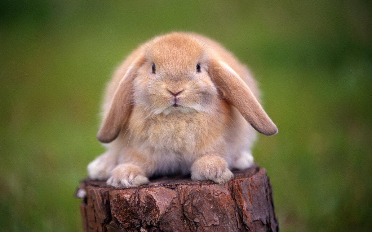 милые картинки зайцев нет стараемся фотографировать
