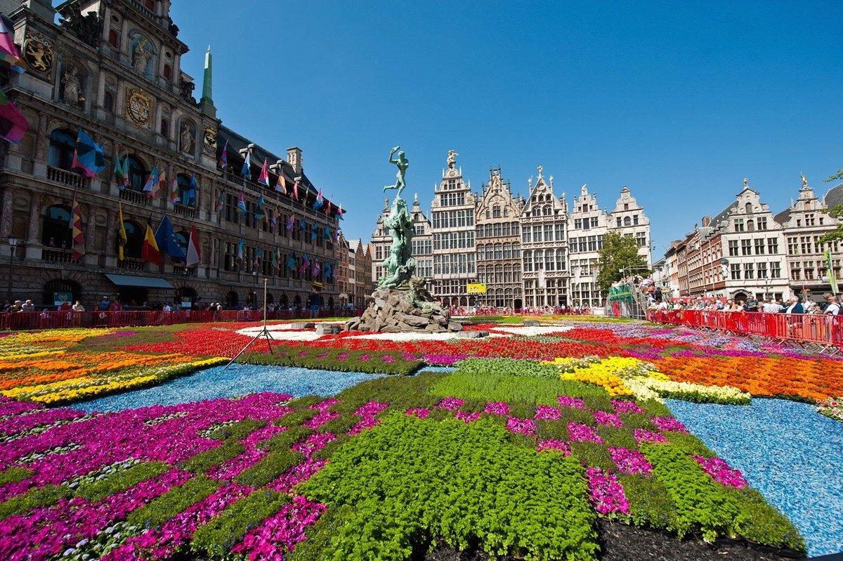 бельгия картинки цветов уточнить, есть-ли