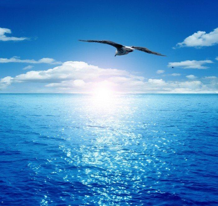 Днем рождения, картинки чайка над морем