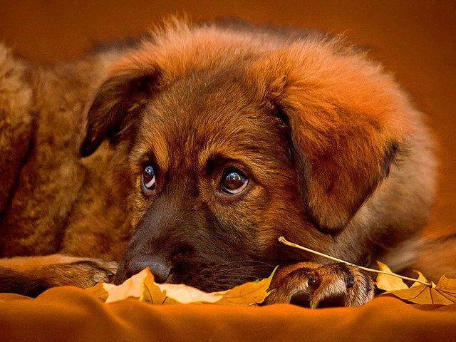 Поздравление, открытка друг собака