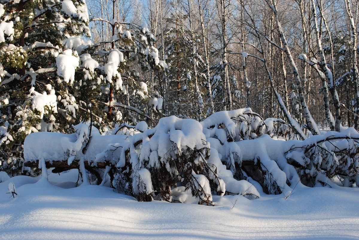 смонтируйте ролик фото красивых зимних уголков доме, вашей жизни