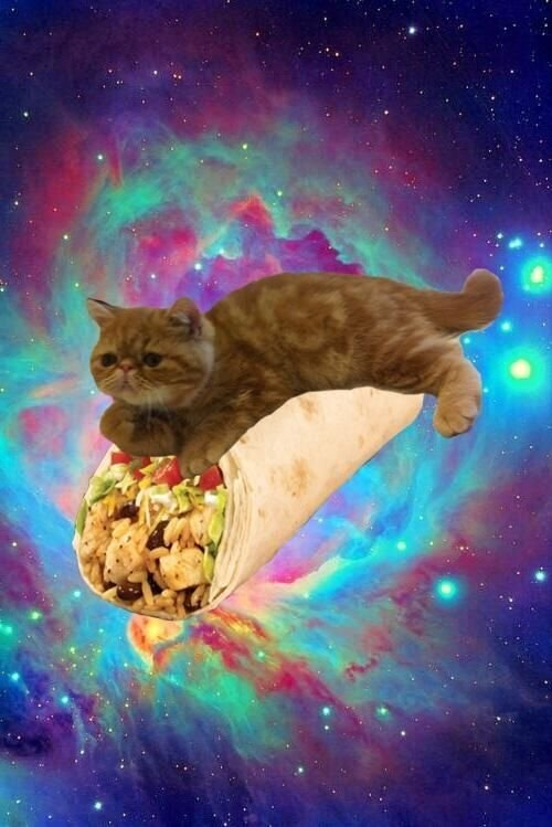 ... O Free download Taco Cat, Space Cats Wallpaper, Space Catss, O