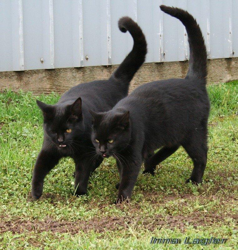 Картинки с надписями черных котов, фото аву стиме