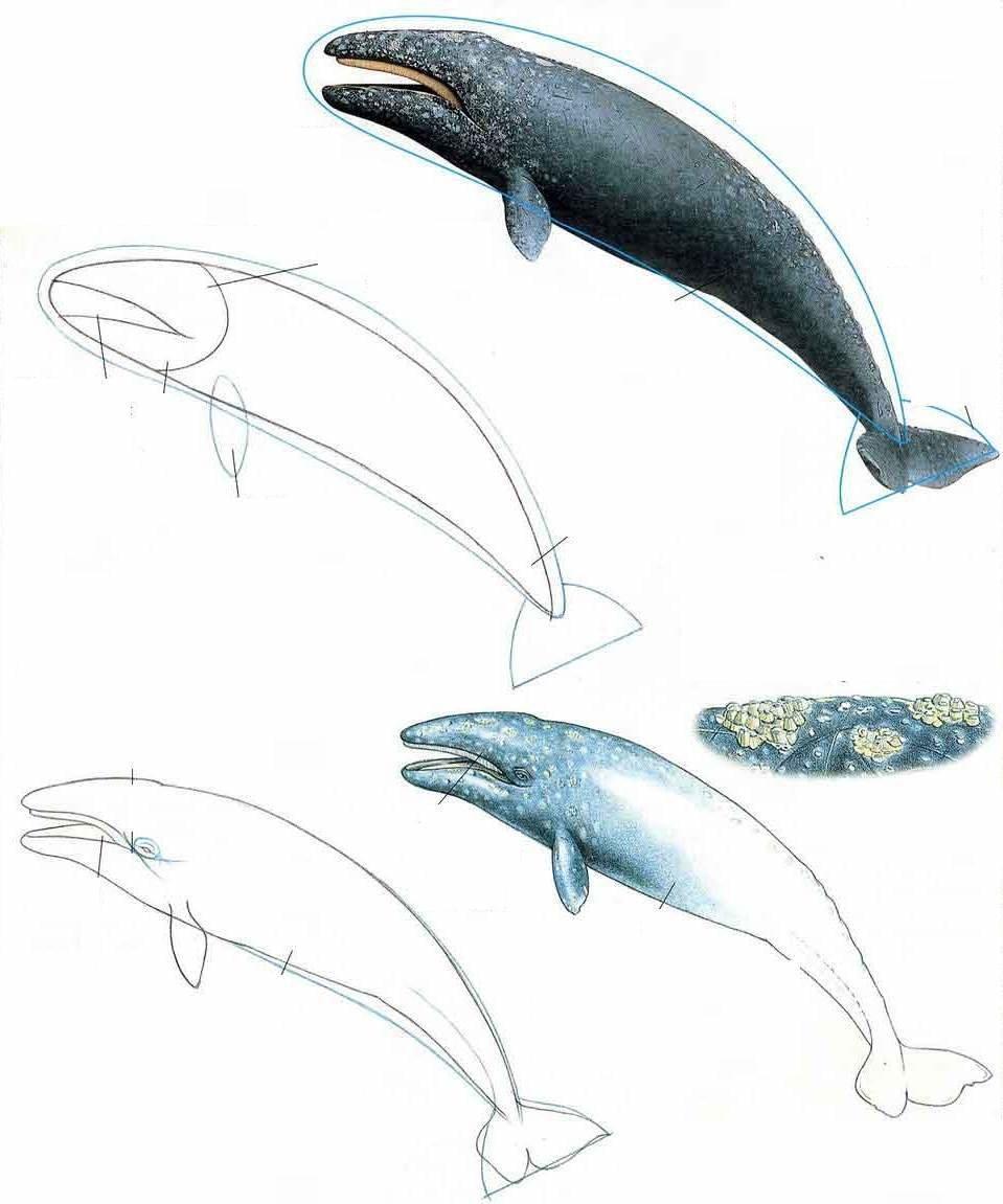 синий кит рисунок карандашом поэтапно приятнее пить чай