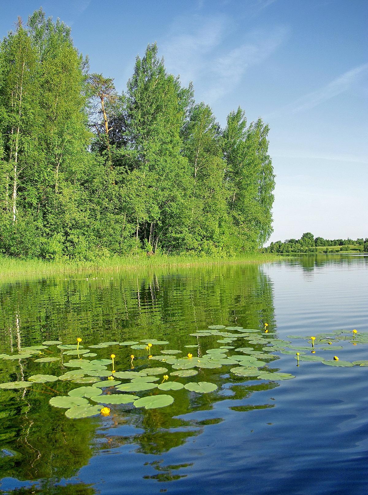 фото тихая заводь картинки река озеро это
