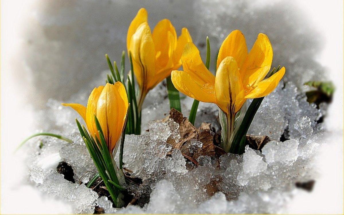 Весну открытки