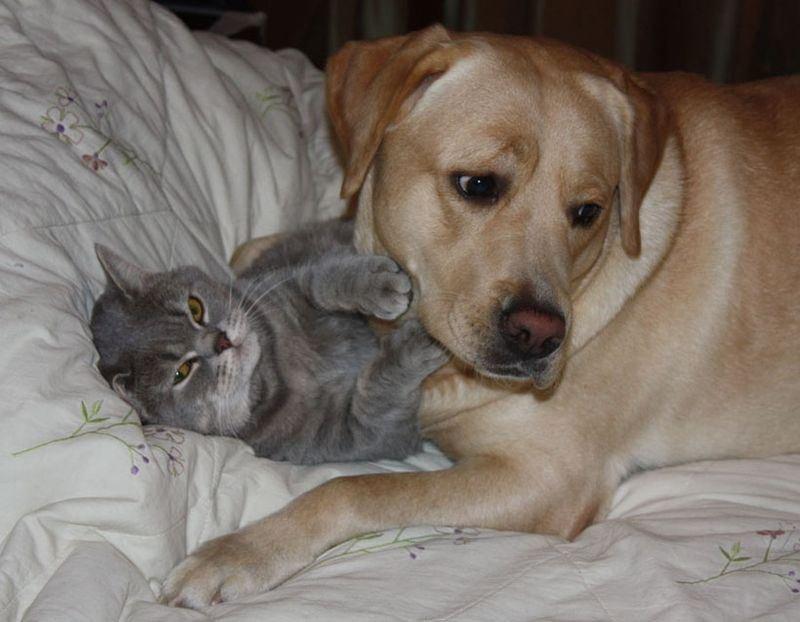 Смешные кошки и собаки картинки, первому апрелю прикольная