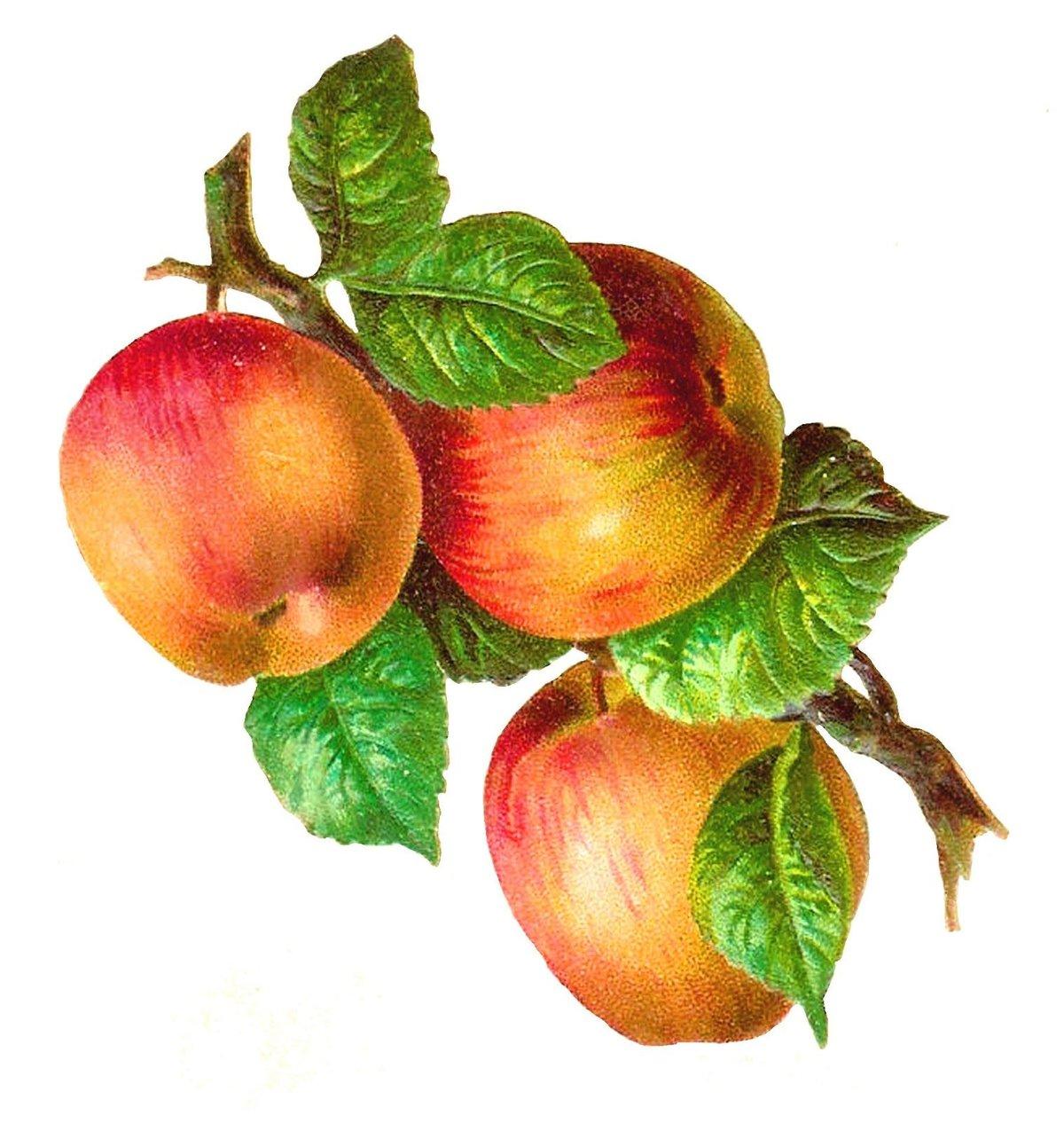 Яблочки открытки, татьяниным днем
