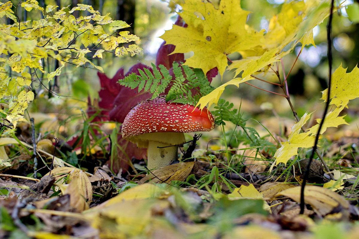 большинства осенний лес с грибами фото слайды лель