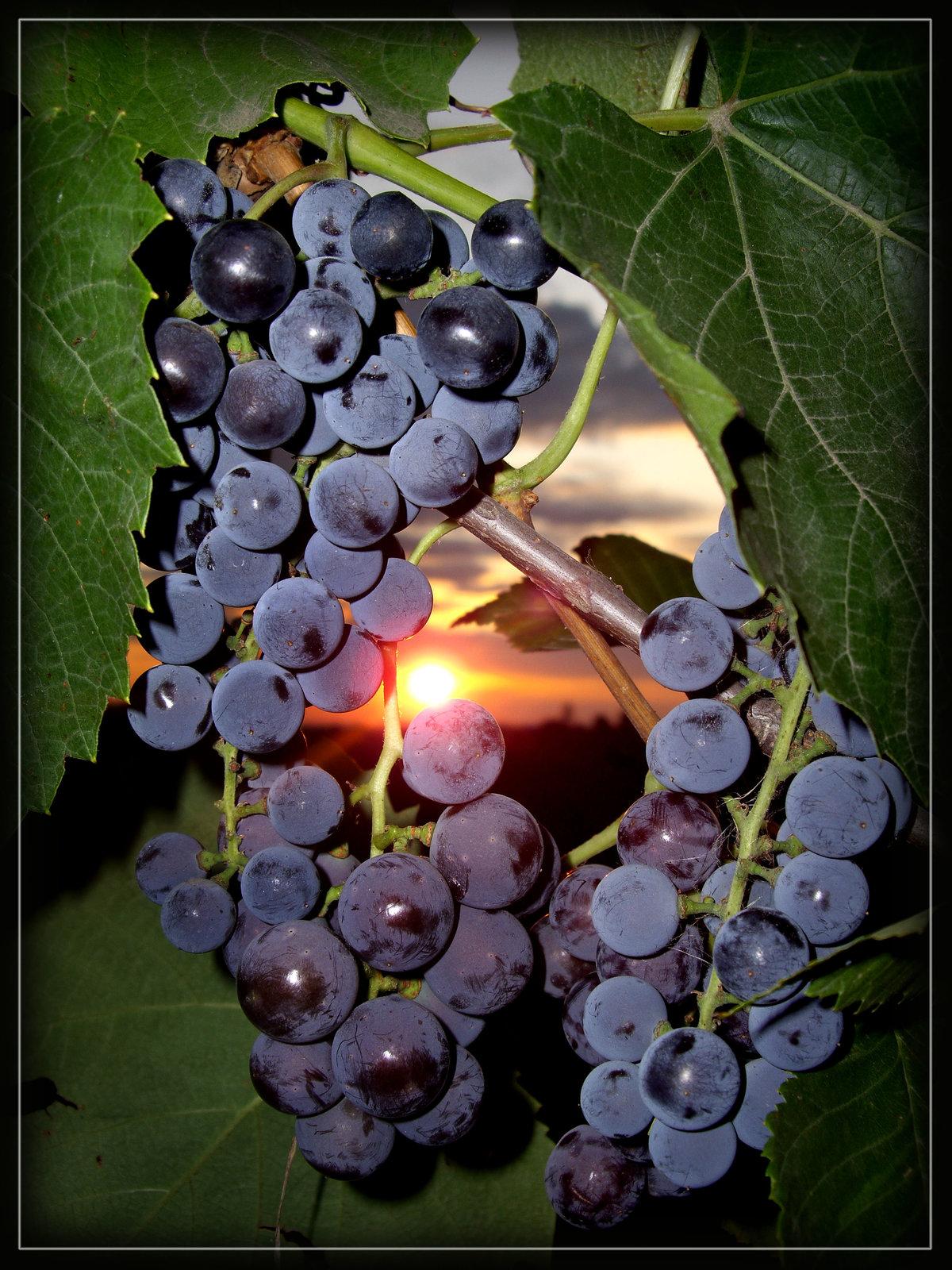 Новогодние, анимашки картинки винограда