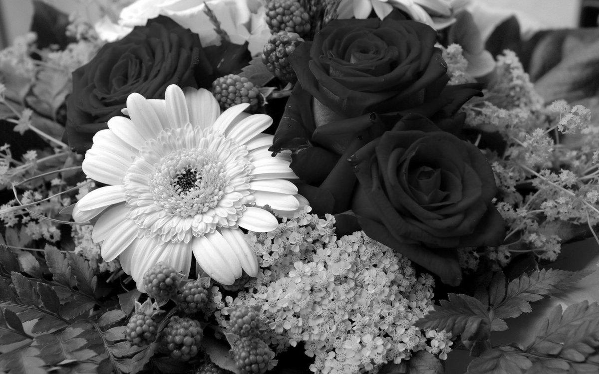 сны красивые черно белые картинки цветы день