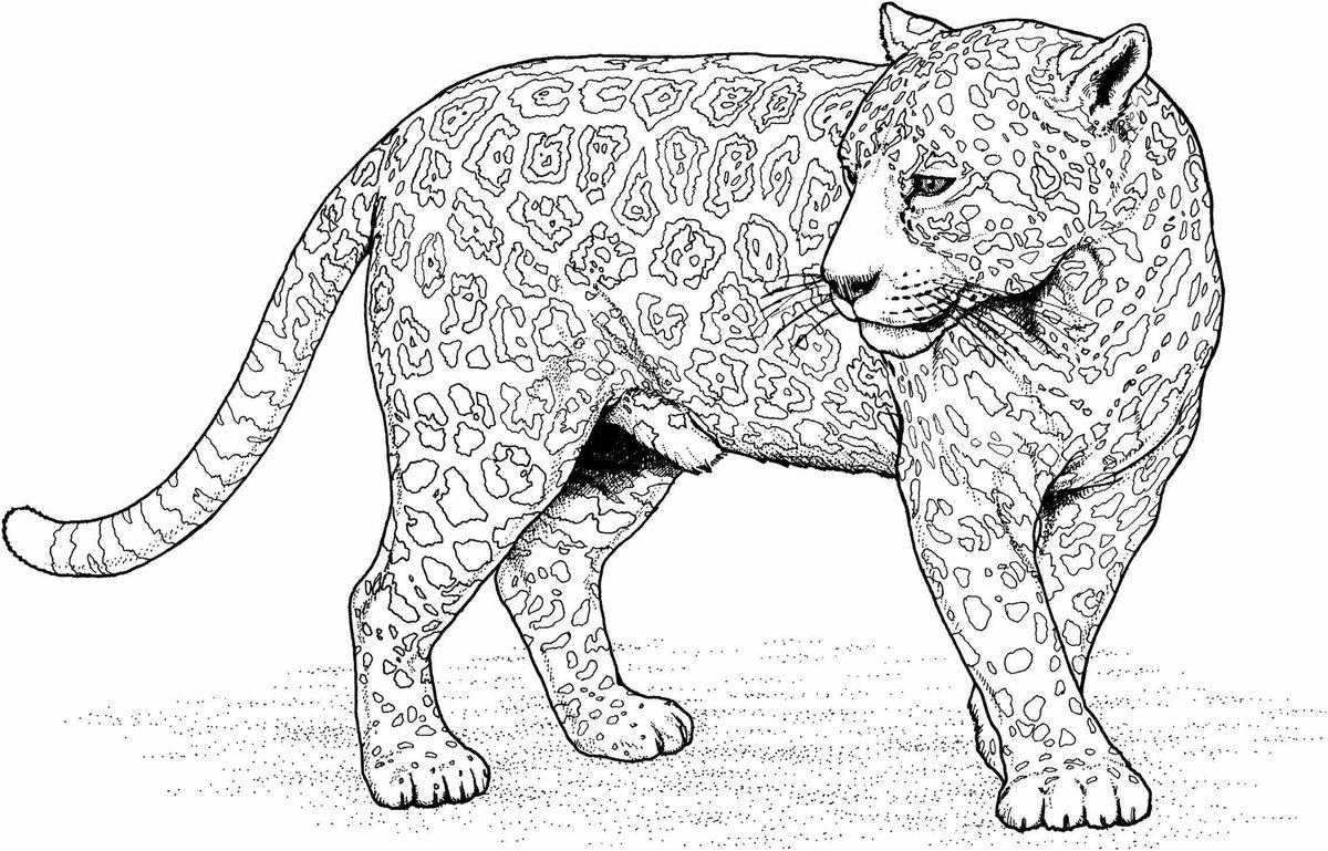 большие животные картинки рисунки болгарии