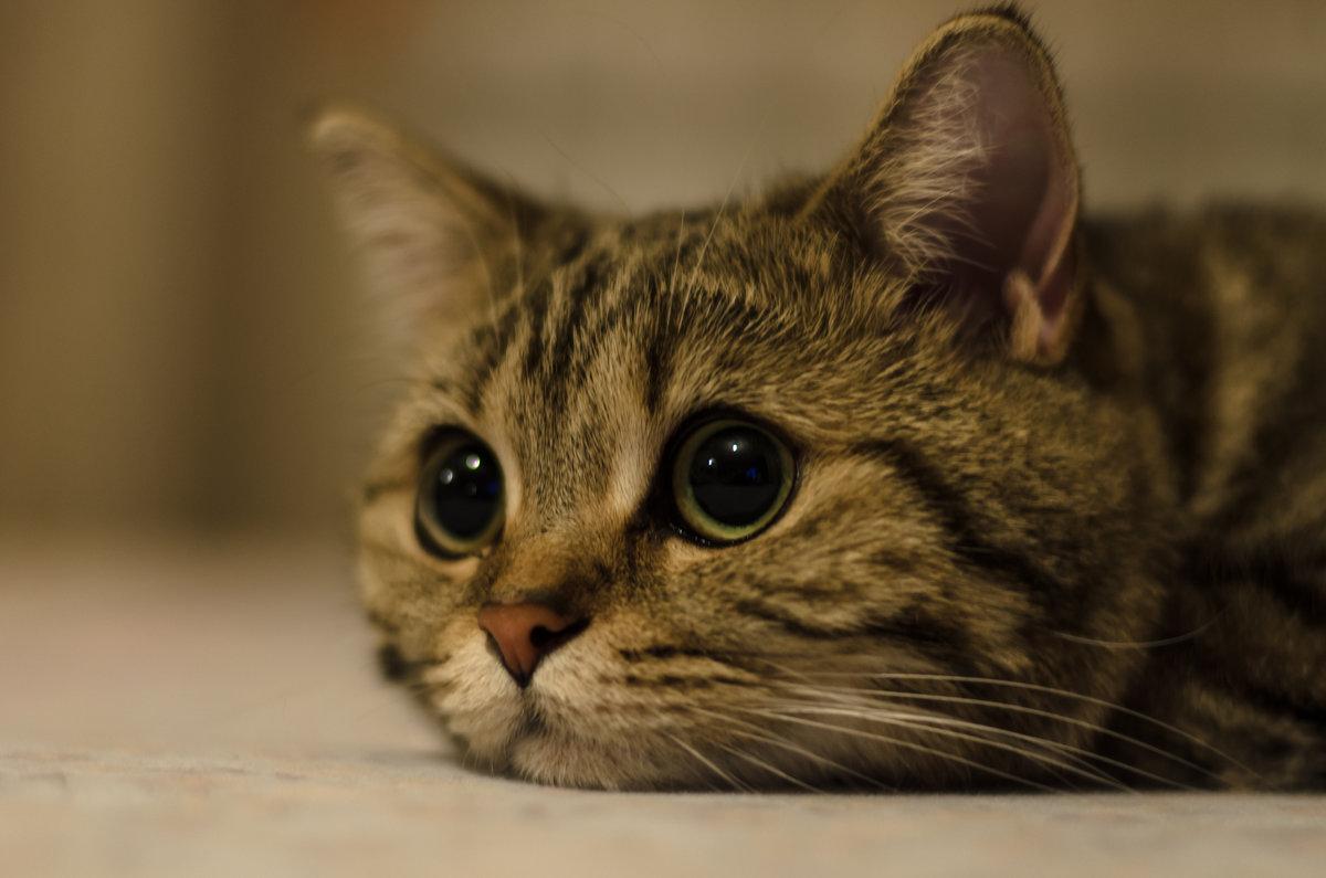 сейчас картинки грустные котята смело наноси