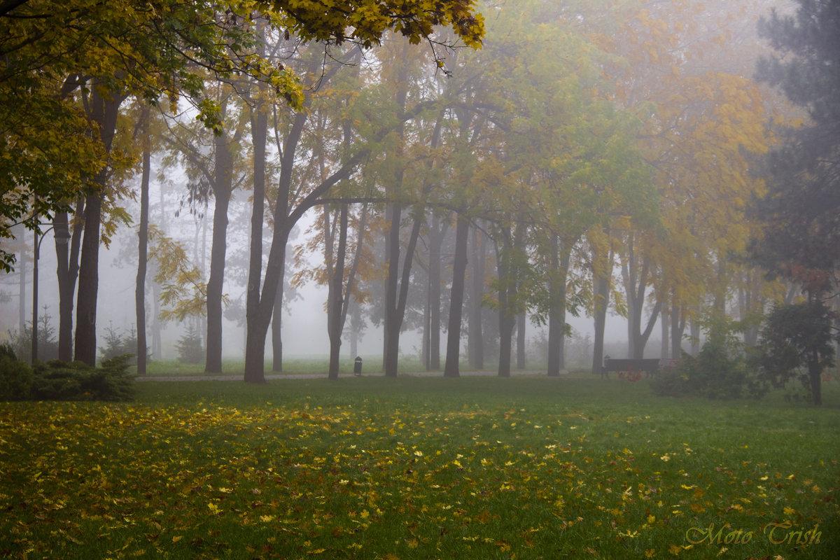 Осень_7#деревья #желтый #лавочки #туман #утро