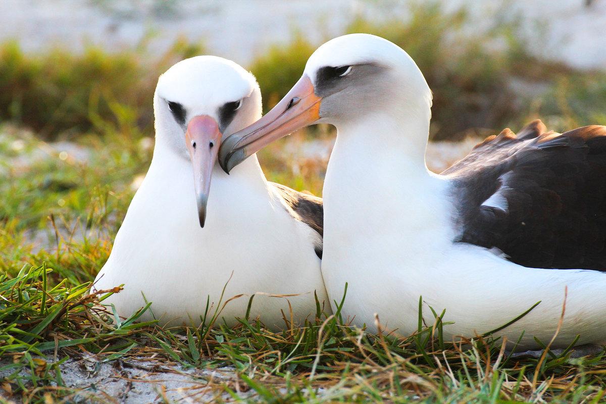 современных фото птицы альбатрос вот фотоаппарат