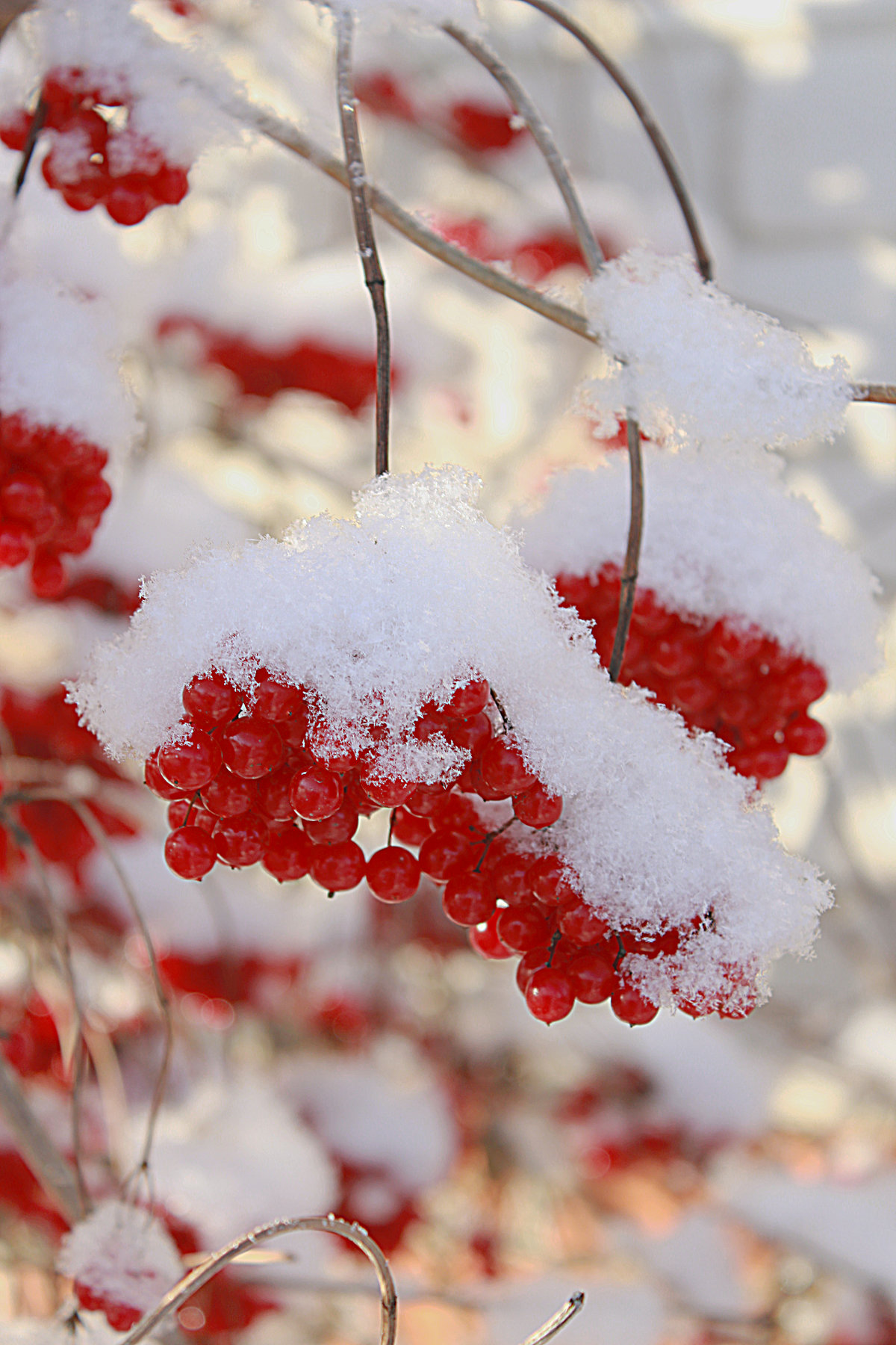 плече картинки зимние красивые на телефон с рябиной вяло