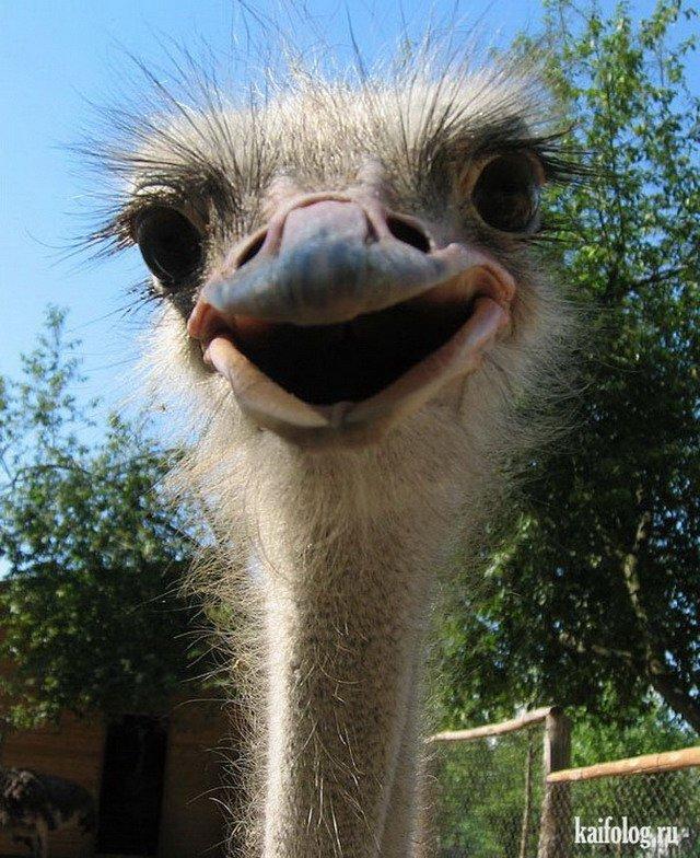 Картинки смешной страус, маме днем