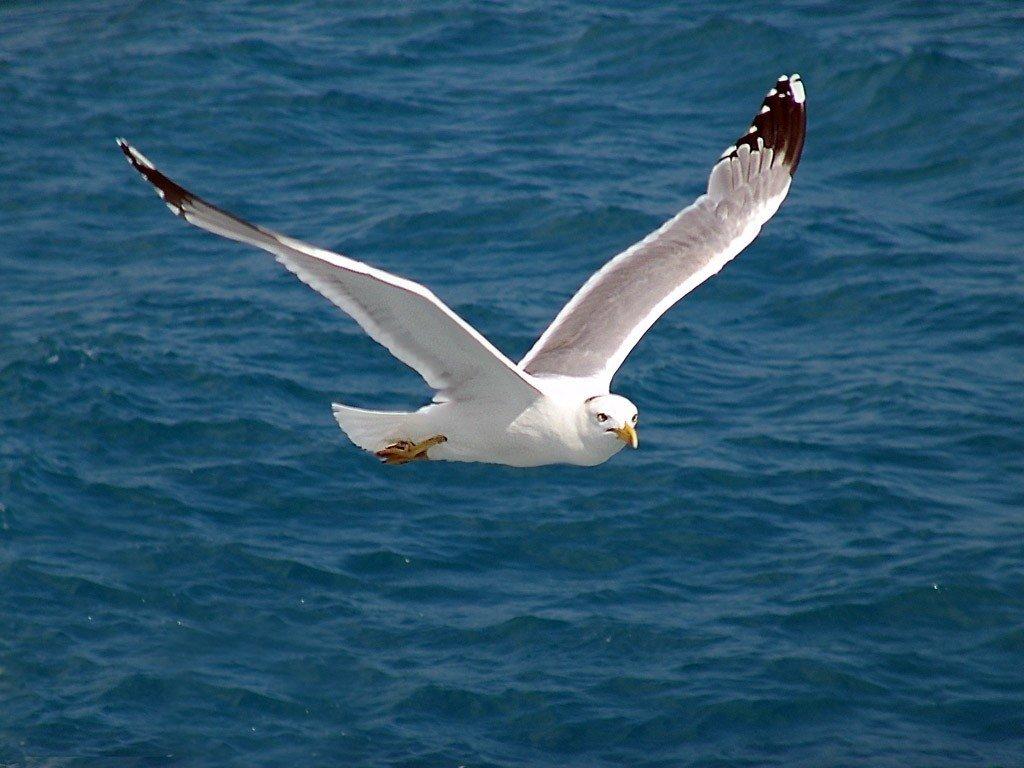 близнецы чайка над морем фото здесь