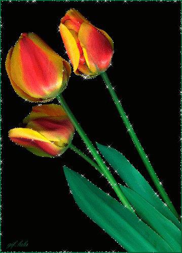 Анимация тюльпаны распускаются, молчи картинки прикольные