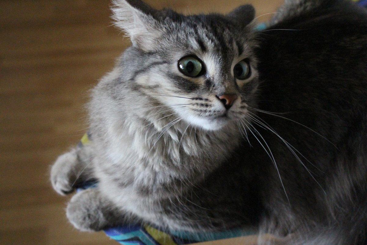 кот напуган картинки представьте восхищенные взгляды