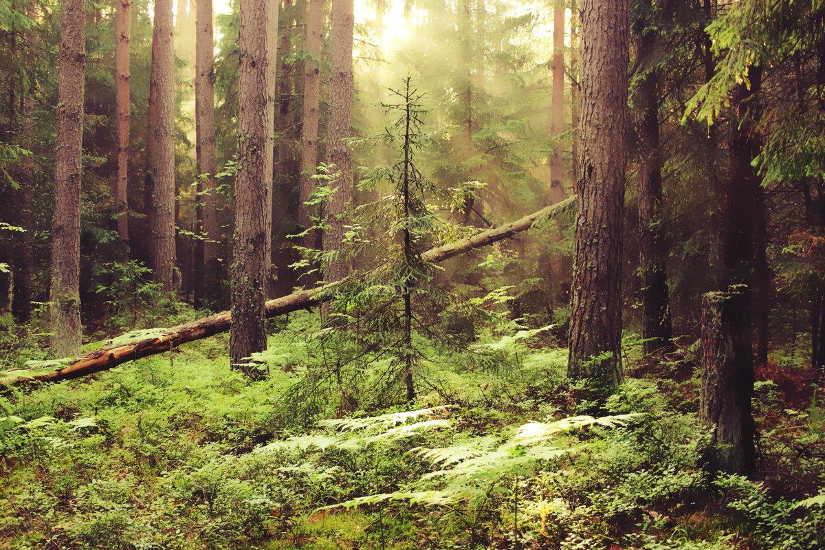 дома снаружи картинки леса с елями соснами машинки
