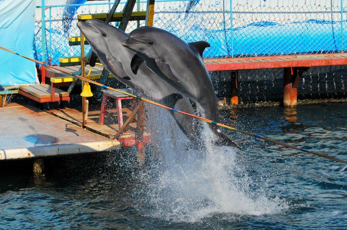Картинки дельфинов символы одну