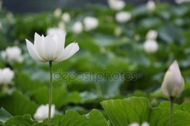 25 Cards In Collection White Lotus Luxury Accommodation Athens Of