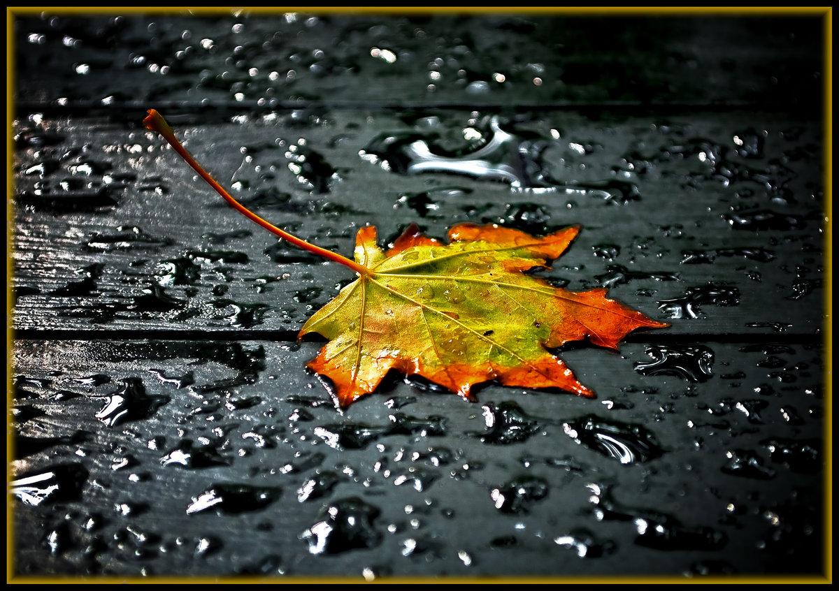 Осенние картинки с дождем, для фотошоп новый