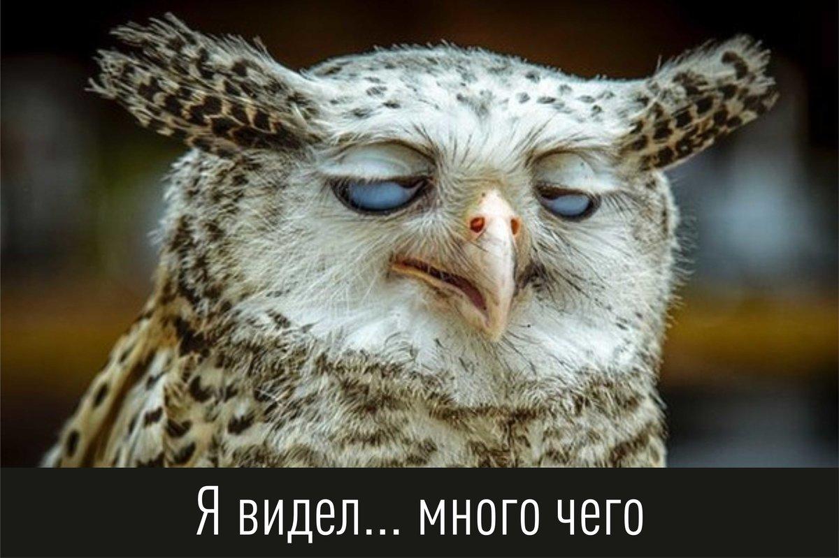 Смешные картинки о ках