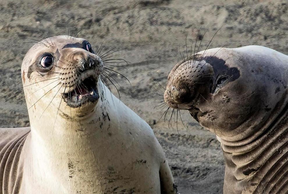 Очень смешные картинки животных, открытки дню