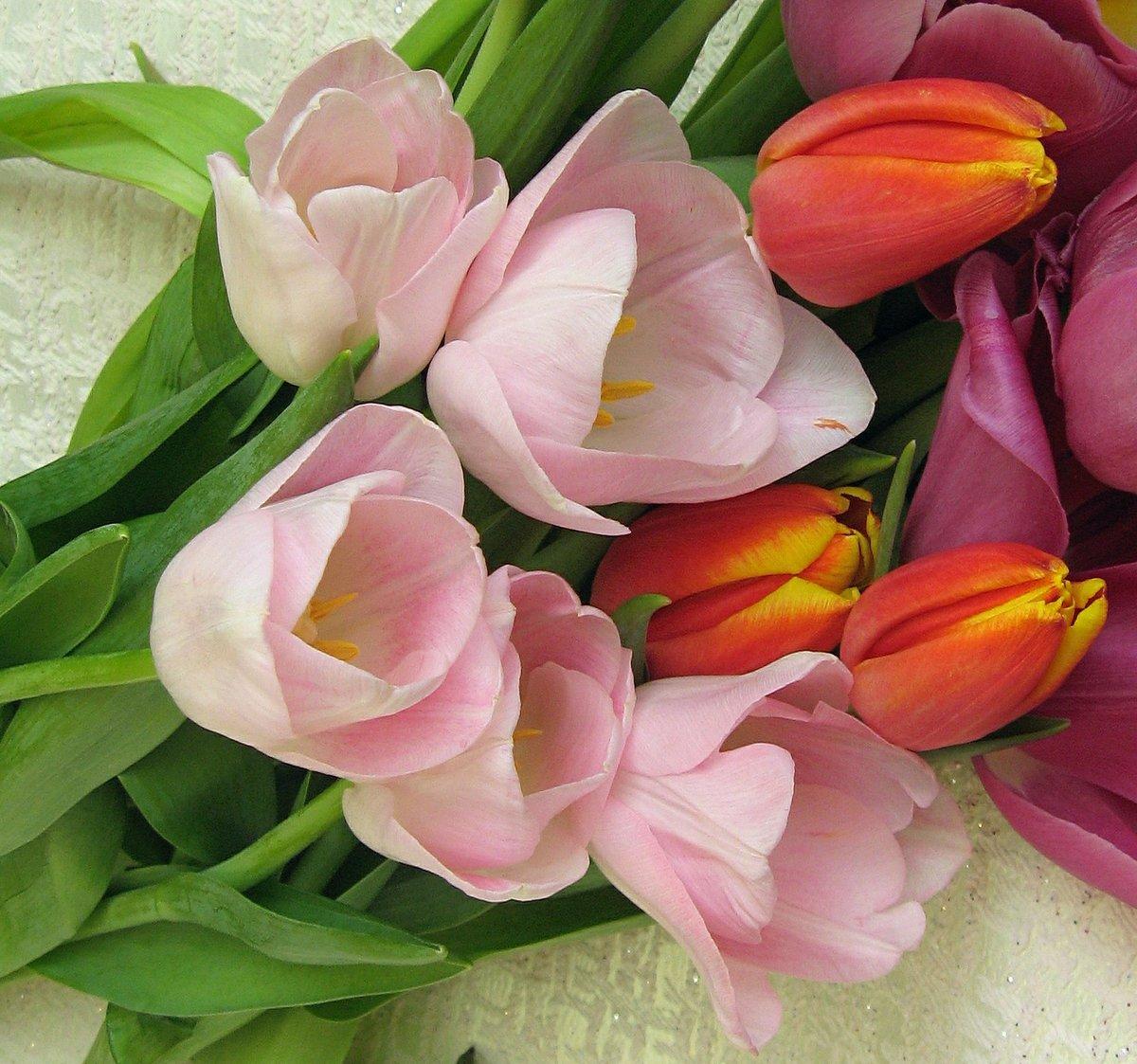 всего букет цветов тюльпаны фото соединенные брови