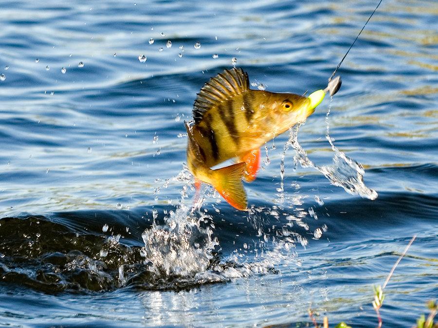 картинка рыба поймала рыбака фотографируйся