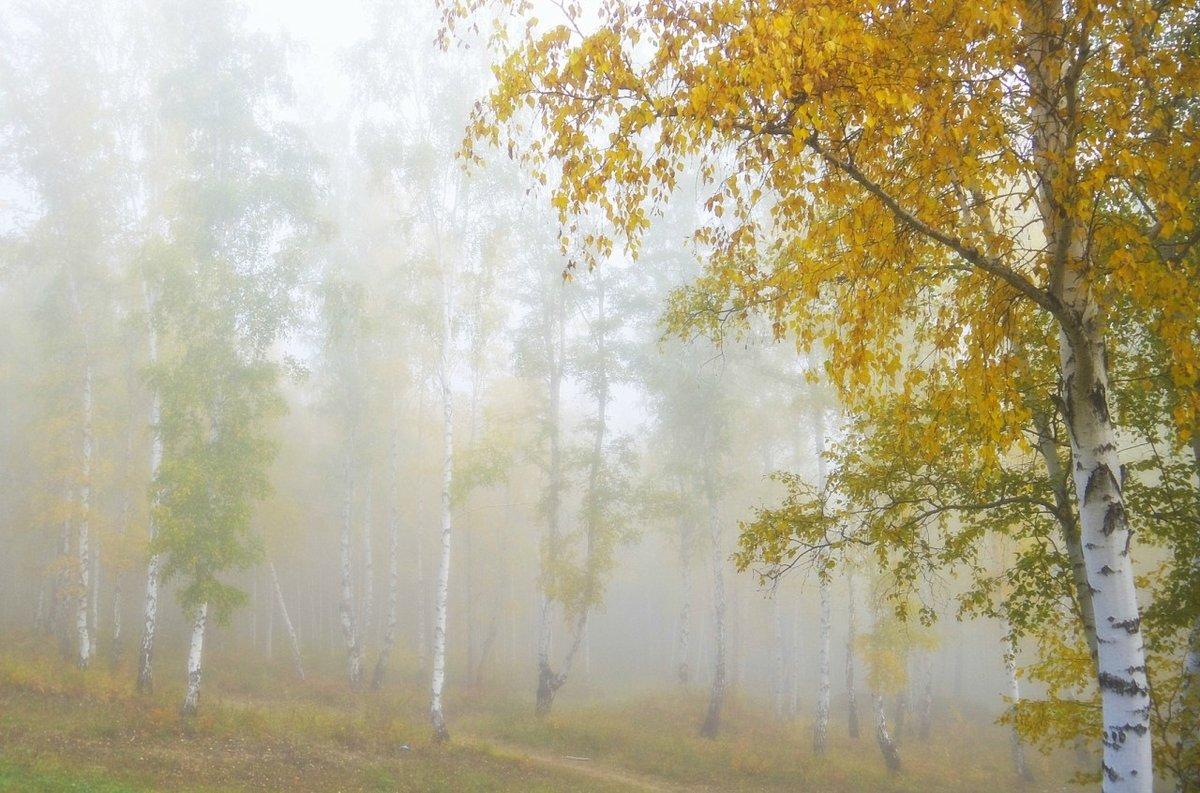 осенний сон#берёзы #конкурс #осень #природа #туман