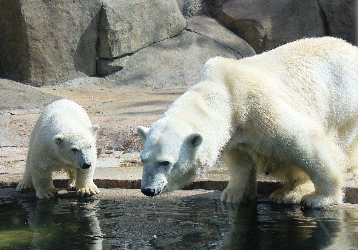 Картинка зоопарк животные